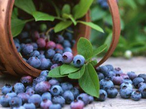 Venta y distribución de productos del entorno rural en Alava